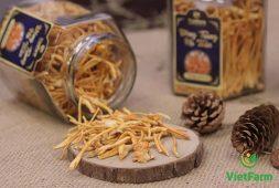 Đông trùng hạ thảo khô - Tác dụng, cách dùng và giá bán mới nhất
