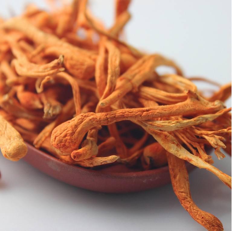 Trùng thảo sấy thăng hoa giữ được hàm lượng dược chất tối ưu