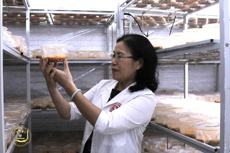 Các chuyên gia cấp cao đang tiến hành nuôi cấy đông trùng hạ thảo trong phòng thí nghiệm hiện đại