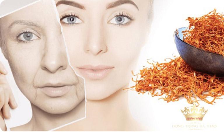 Đông trùng hạ thảo có tác dụng làm đẹp da, chậm quá trình lão hóa