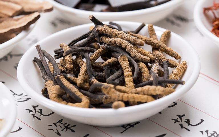 Đông trùng hạ thảo Việt Nam có hàm lượng dinh dưỡng bằng khoảng 70% trùng thảo tự nhiên