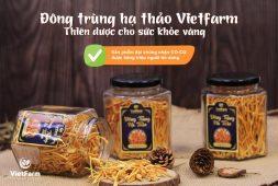 Địa chỉ mua đông trùng hạ thảo uy tín - Vietfarm